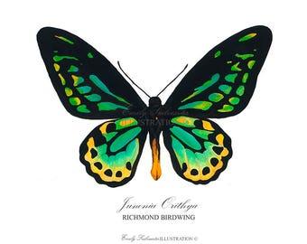 Butterfly Art Print | Richmond Birdwing Green Butterfly Wall Art | Scientific Nature Illustration Lepidoptera | Watercolor Home Decor Poster