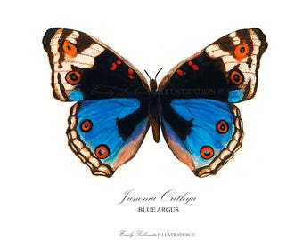 Butterfly Art Print | Blue Argus Butterfly Wall Art | Scientific Nature Illustration Lepidoptera | Watercolor Home Decor Poster
