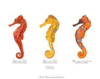 Seahorse Collection Art Print | Sea Creature Wall Art | Scientific Nature Illustration Hippocampus | Orange Watercolor Home Decor Poster