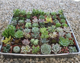 Succulent Container Etsy