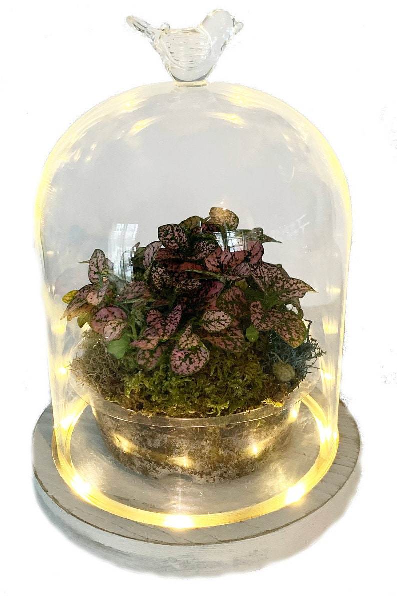 Light Me Up Led Terrarium With Glass Bird And Live Plants Etsy