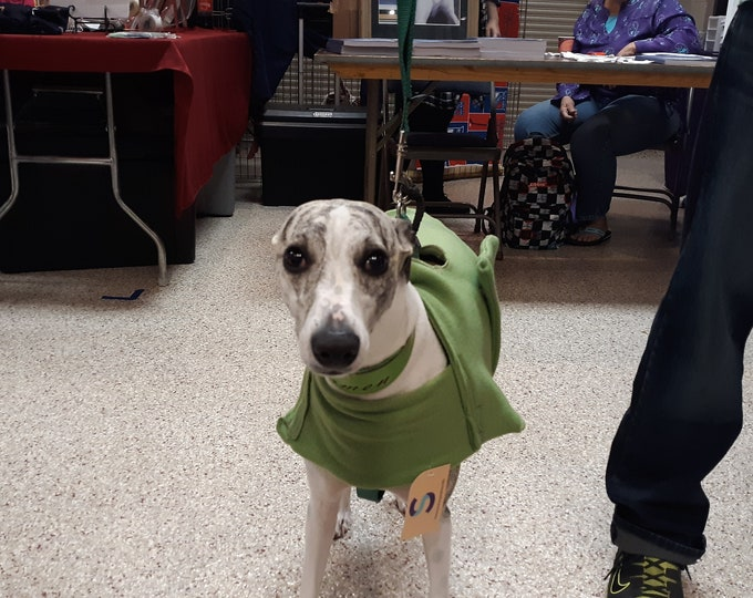 Whippets and Italy Greyhound  category.  Which includes coats , pajamas and belly bands for them.