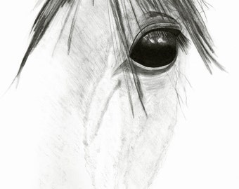 """Horse Art Print - Horse Eye, Pencil Drawing, 8""""x12"""" Image, Black and White, Equine Soul"""