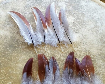 Cruelty free feathers - 10 grey with asymmetrical red patterns secondary wing feathers, from organic, free range chickens, all natural (s59)