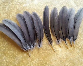 Cruelty free feathers, 10 long grey wing feathers 7-8 inches, from a free range organic chicken - s38