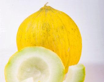 Melon Casaba Yellow Non GMO Garden Fruit Seeds Sow No GMO®