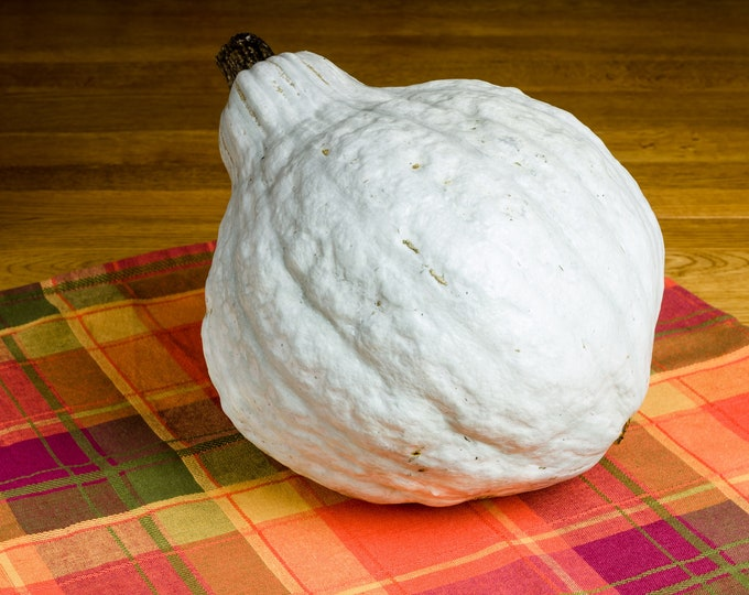Squash Winter Blue Hubbard Non GMO Heirloom Vegetable Seeds Sow No GMO® USA