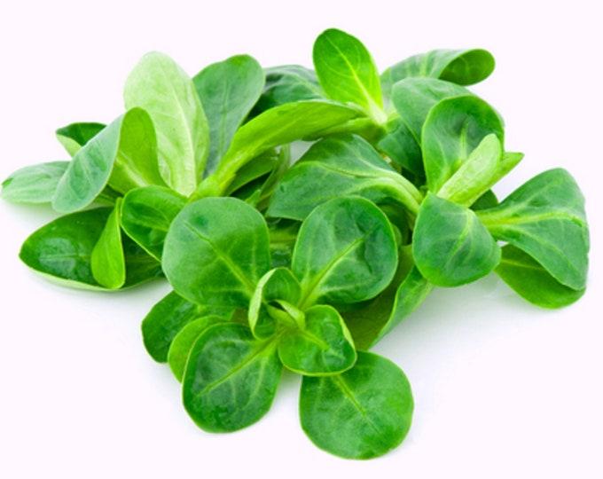 Corn Salad Mache Lamb's Lettuce Non GMO Heirloom Vegetable Seeds Sow No GMO® USA