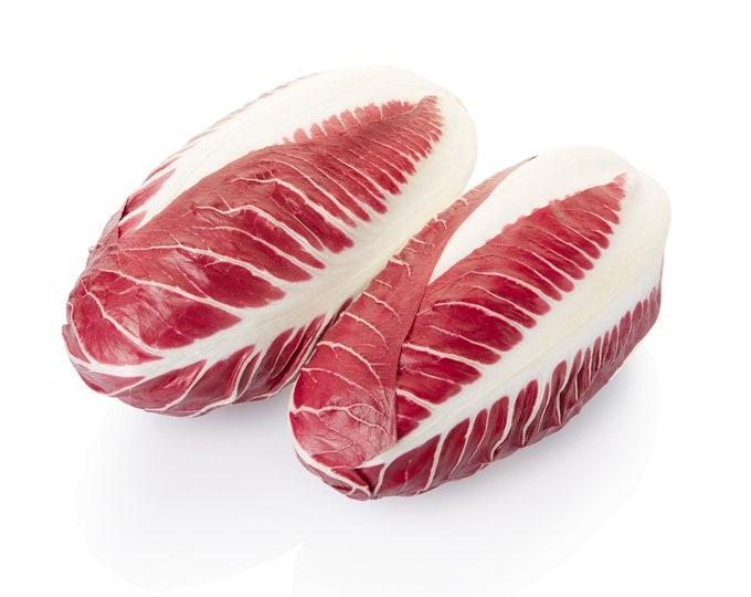 Radicchio Rossa di Treviso Non GMO Heirloom Vegetable Seeds Sow No GMO® USA