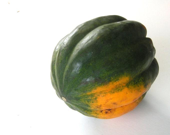 Squash Winter Acorn Table Queen Non GMO Heirloom Vegetable Seeds Sow No GMO® USA