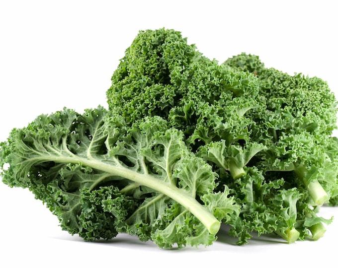 Kale Scotch Blue Curled Non GMO Garden Vegetable Seeds Sow No GMO® USA