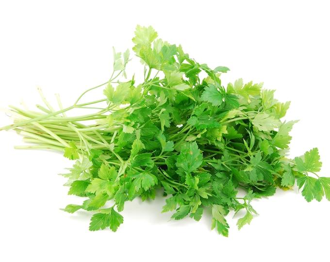 Parsley Italian Non GMO Heirloom Garden Herb Seeds Sow No GMO® USA