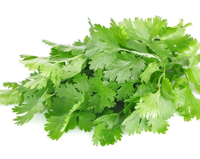 Cilantro/Coriander Common Herb Non GMO Heirloom Herb Seeds Sow No GMO® USA