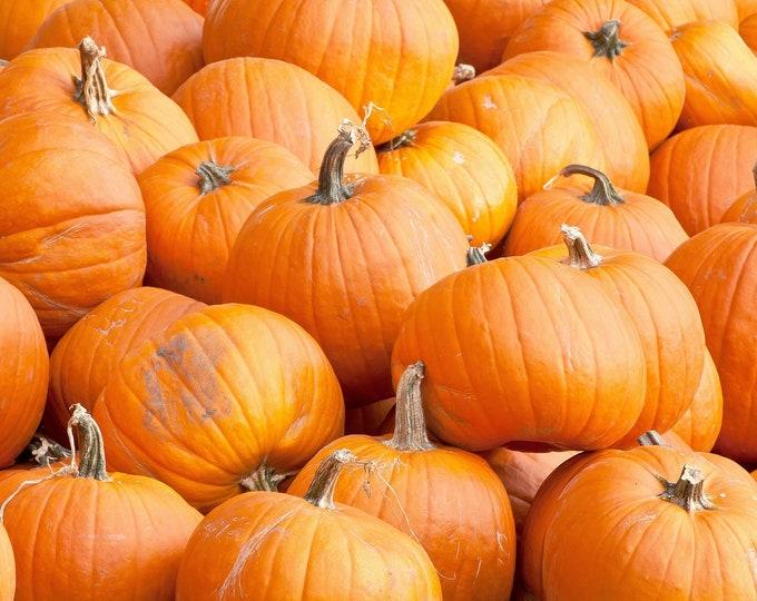Pumpkin Spookie Non GMO Heirloom Garden Vegetable Seeds Sow No GMO® USA