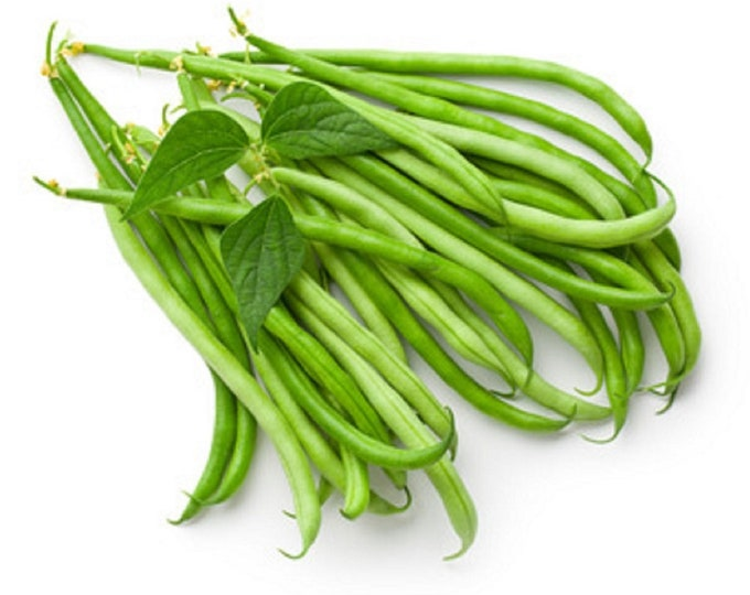 Bean Seeds, Pole Beans, Kentucky Wonder, Non GMO, Heirloom, Home Garden, Vegetable Seeds, String Beans, Snap Beans, USA Seller