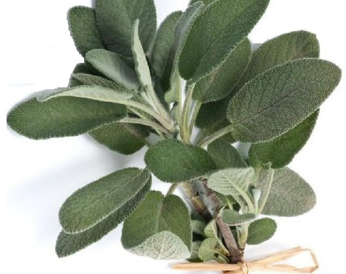 Sage Broadleaf Non GMO Heirloom Aromatic Culinary Garden Herb Seeds Sow No GMO®