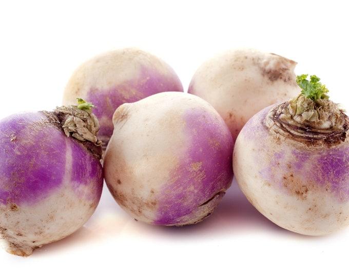 Rutabaga American Purple Top Non GMO Heirloom Vegetable Seeds Sow No GMO® USA