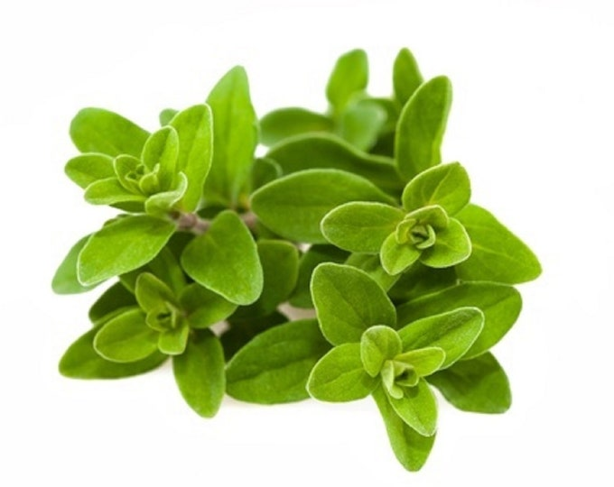 Marjoram Sweet Non GMO Heirloom Culinary Garden Herb Seeds Sow No GMO® USA