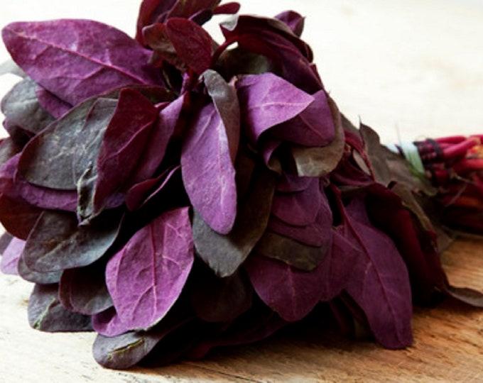 Orach Triple Purple Mountain Spinach Non GMO Garden Vegetable Seeds Sow No GMO® USA