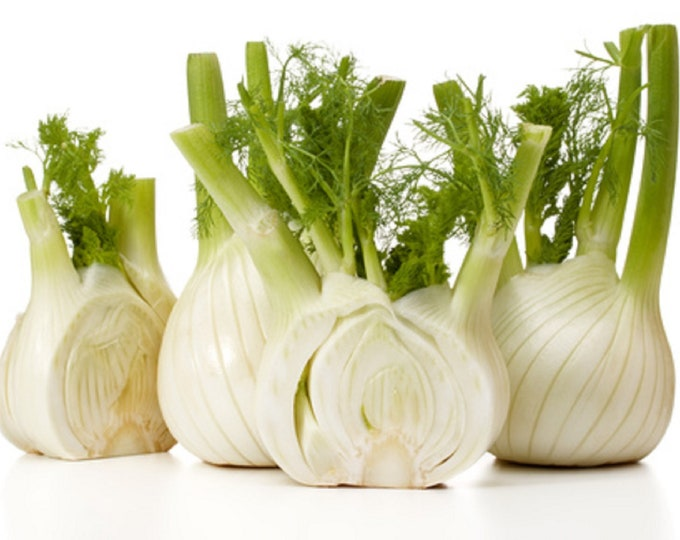 Fennel Florence Non GMO Heirloom Aromatic Garden Herb Seeds Sow No GMO® USA