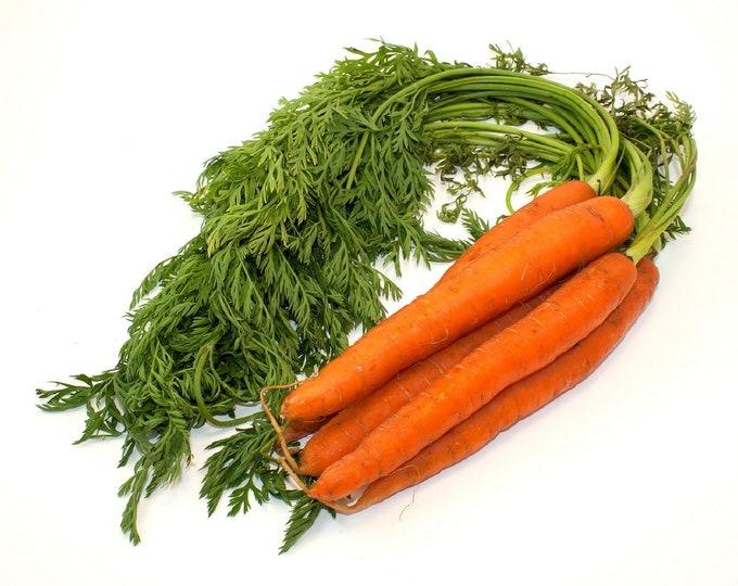 Carrot Danvers 126 Non GMO Heirloom Garden Vegetable Seeds Sow No GMO® USA