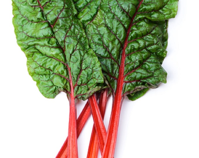 Swiss Chard Ruby Red Non GMO Heirloom Vegetable Seeds Sow No GMO® USA