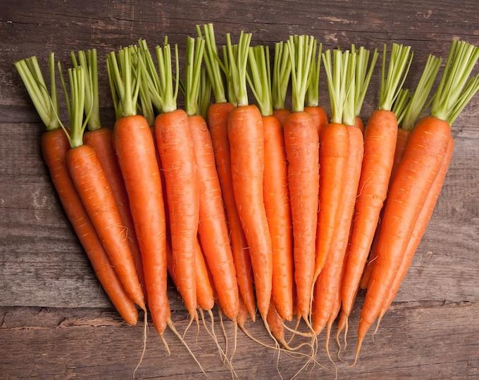 Carrot Scarlet Nantes Non GMO Heirloom Garden Vegetable Seeds Sow No GMO® USA
