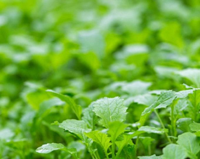 Mustard Florida Broadleaf Non GMO Heirloom Vegetable Seeds Sow No GMO® USA