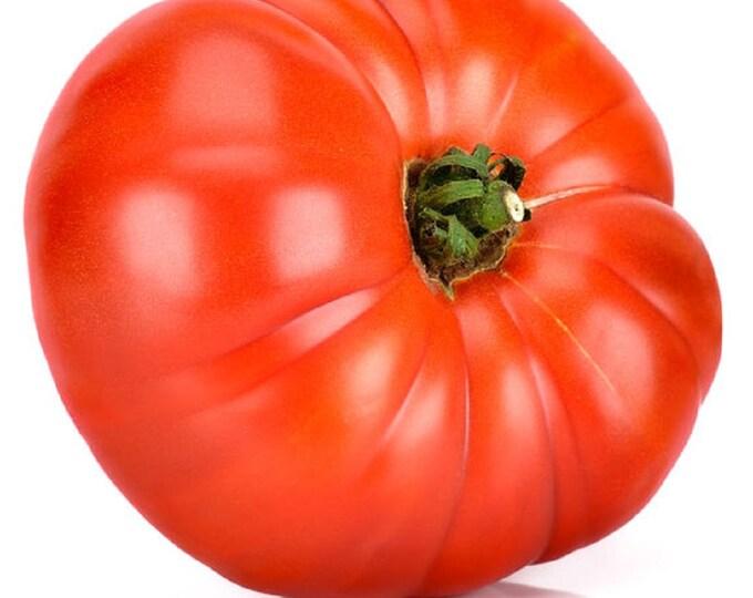 Tomato Beefsteak Non GMO Heirloom Garden Vegetable Seeds Sow No GMO® USA