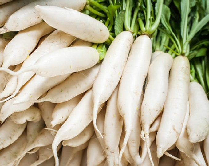 Radish Japanese Minowase Daikon Non GMO Heirloom Vegetable Seeds Sow No GMO® USA