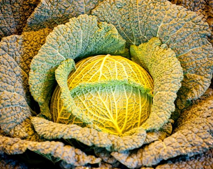Cabbage Savoy Non GMO Heirloom Garden Vegetable Seeds Sow No GMO® USA