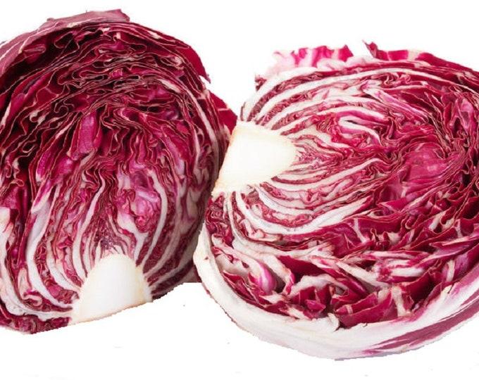 Radicchio Rouge de Verona Non GMO Heirloom Vegetable Seeds Sow No GMO® USA