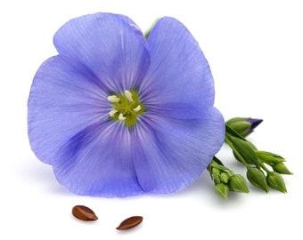 Flax - Blue Flower Non GMO Heirloom Garden Flower Seeds Sow No GMO® USA