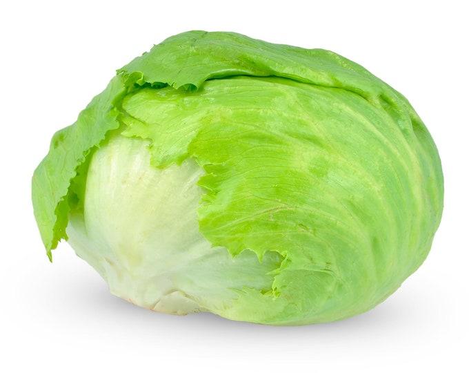 Lettuce Iceberg Non GMO Heirloom Garden Vegetable Seeds Sow No GMO® USA