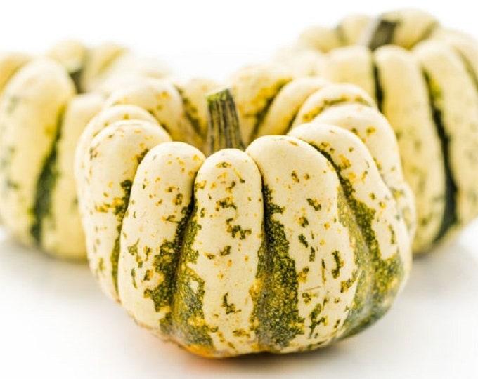 Squash Winter Sweet Dumpling Non GMO Heirloom Garden Vegetable Seeds Sow No GMO®