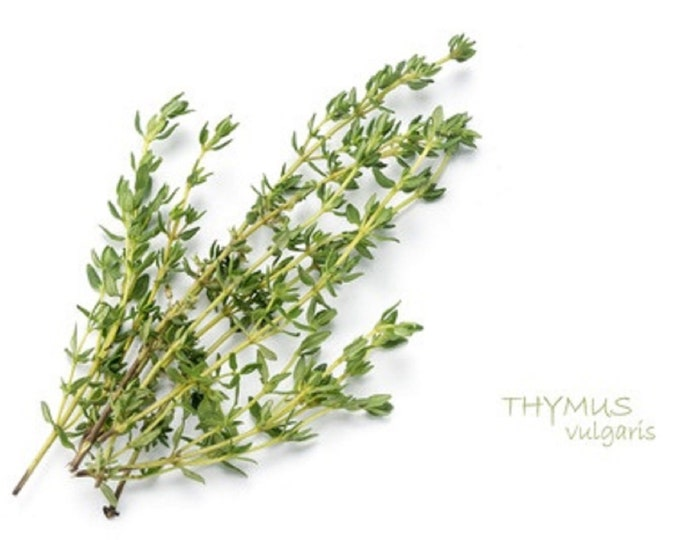 Thyme Non GMO Heirloom Aromatic Culinary Garden Herb Seeds Sow No GMO® USA