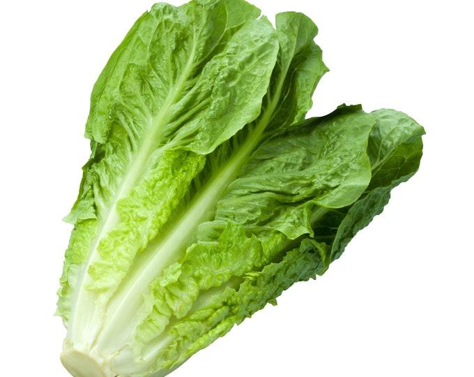Lettuce Romaine Parris Island Cos Non GMO Heirloom Vegetable Seeds Sow No GMO®