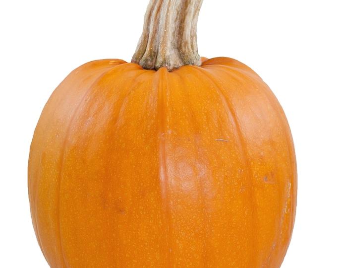 Pumpkin Small Sugar Pie Non GMO Heirloom Garden Vegetable Seeds Sow No GMO® USA