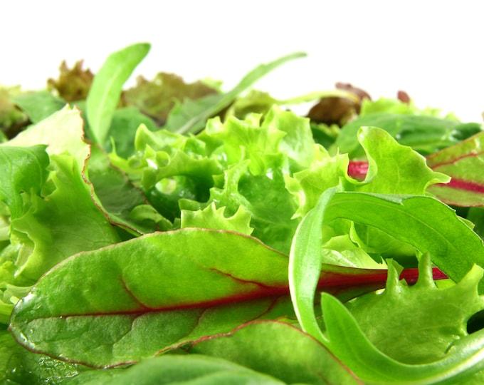 Lettuce Mixed Greens Mesclun Non GMO Heirloom Vegetable Seeds Sow No GMO® USA