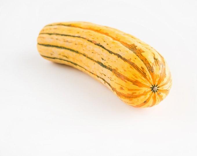 Squash Winter Delicata Non GMO Heirloom Garden Vegetable Seeds Sow No GMO® USA