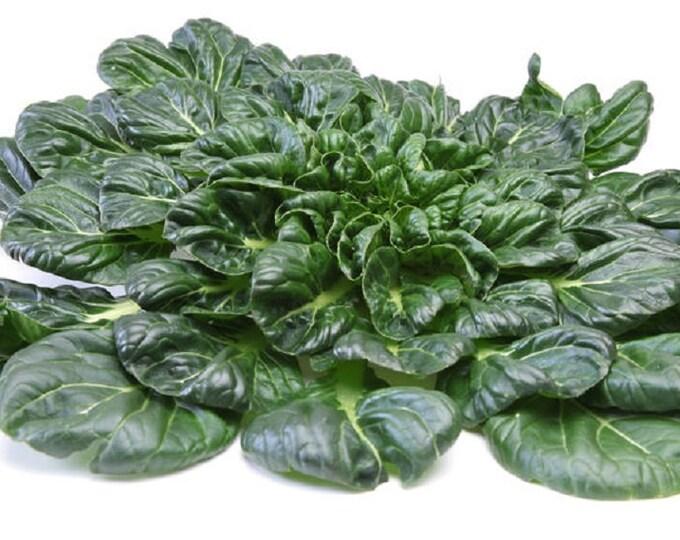 Mustard Tatsoi Japanese / Asian Non GMO Heirloom Vegetable Seeds Sow No GMO® USA
