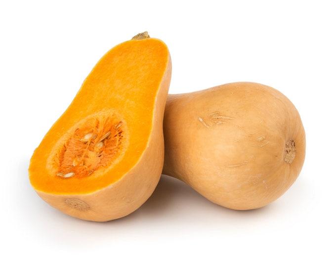 Squash Winter Waltham Butternut Non GMO Heirloom Vegetable Seeds Sow No GMO® USA