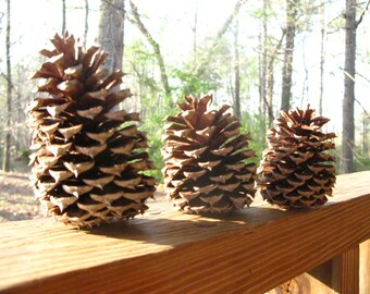 Pine Cones - Rustic Home or Wedding Decor - Natural Craft Supply - Georgia Grown Pine Cones - Pine Cones for Crafting - DIY Rustic Projects