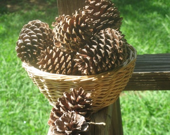 Pine Cones - Flat Bottom Pinecones - Rustic Wedding Decor - Natural Craft Supply - DIY Home Decor - Natural Christmas Ornament Decor