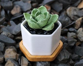 Small Crepe Paper Succulent with Gravel & Pot DIY Kit
