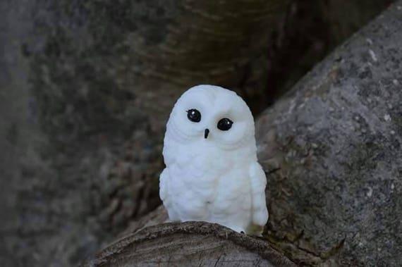 Baby Snow Owls Sleeping