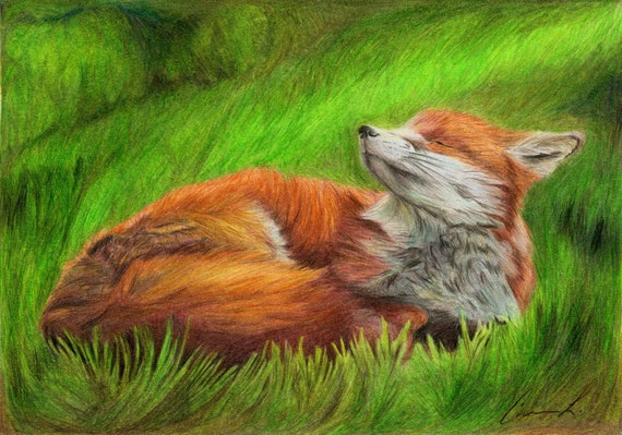 Just Breathe - high quality, archival print of a red fox in the grass