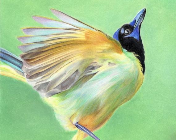 Spring Dance. Original mixed media painting of a green jay - Dessin original