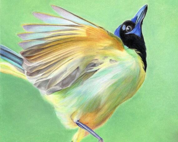 Green Jay Artwork. Digital downloadable print.