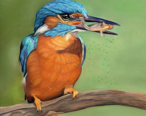 Kingfisher's Catch- high quality archival print